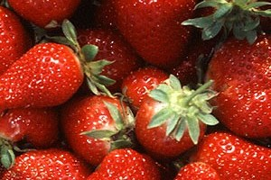 Chandler_strawberries