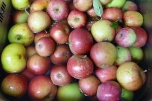 Der Unterschied zwischen Glucose und Fructose