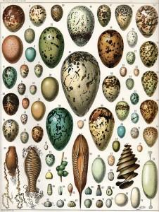 Bio-Eier oder Freilandeier?