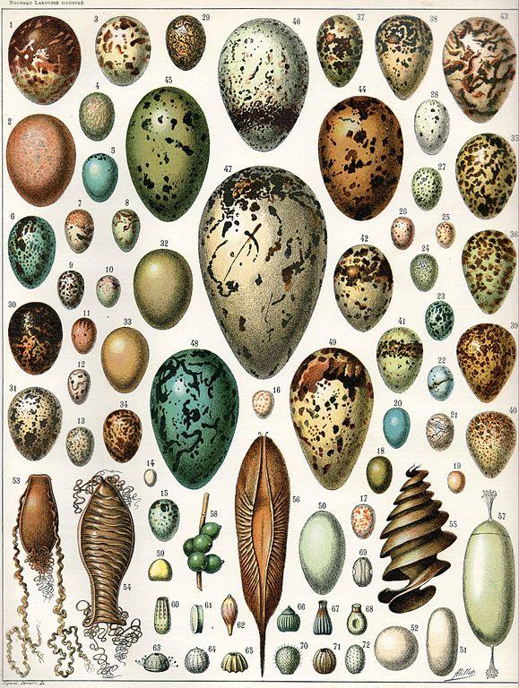 sind eier gesund wie viele eier sind gesund urgeschmack. Black Bedroom Furniture Sets. Home Design Ideas