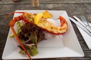 Crayfish (Krebs), frisch aus dem Meer.