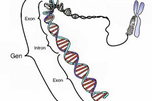 Sidn genetisch veränderte Lebensmittel ungesund?